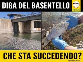 BASENTELLO_HOME